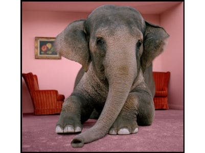 2c057661daf84 Our Lack of Self-Confidence is the Elephant in The Room. - 3Plus ...